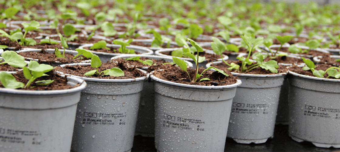 Plant Passport Printing Velmans Potted Plants Hero Image PrintSafe