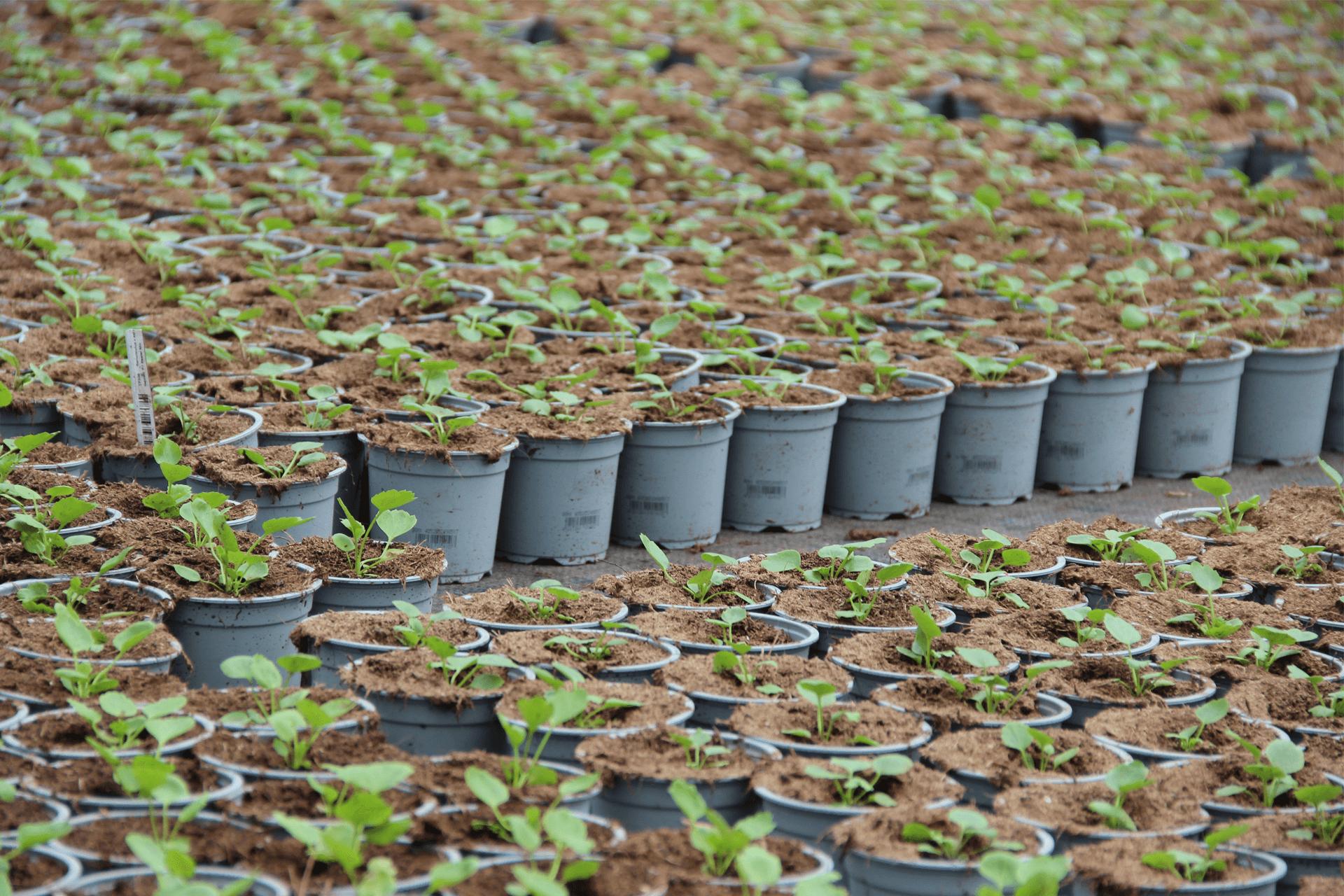 Plant Pot Printing Biodegradable Pots Velmans PrintSafe